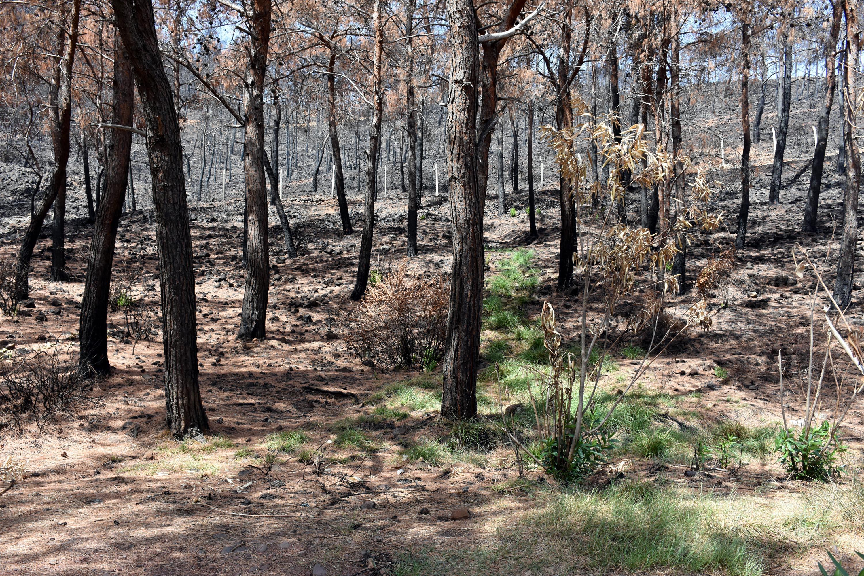 <p>Sık kızılçam ağaçlarıyla kaplı İçmeler, Osmaniye ve Turunç mahallelerindeki ormanlık alanlarda kozalakların patlayıp, fırlamasıyla yangın büyüdü. Havadan ve karadan gece-gündüz söndürme çalışmasıyla 9'uncu günde yangın söndürüldü.</p>
