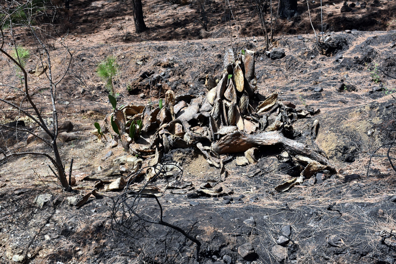 <p>Marmaris'in İçmeler yolu üzerindeki Armutalan Mahallesi Siteler mevkisinin üst kısımlarındaki kızılçam ağaçlarıyla kaplı ormanlık alanda, 29 Temmuz günü saat 13.00 sıralarında yangın çıktı. Yangın, kuru otların tutuşması ve şiddetli rüzgarın da etkisiyle kısa sürede yayıldı.&nbsp;<br></p>