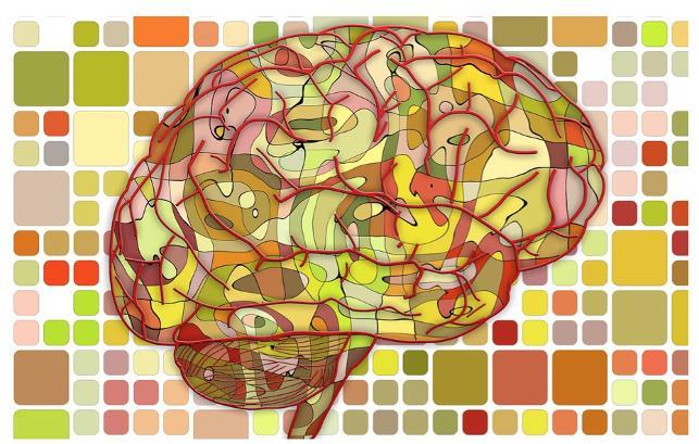 Beyni büyük olan kazanır