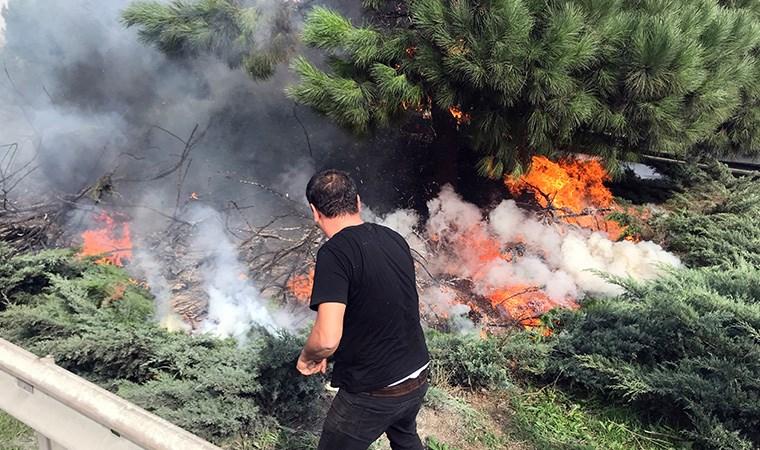 Ağaçlar alev alev yandı, yurttaş seferber oldu