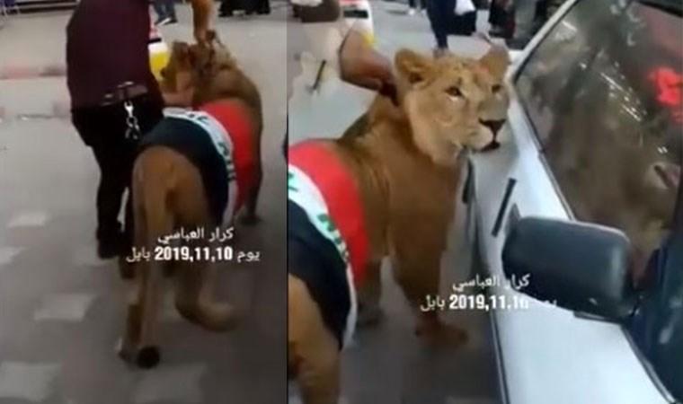Göstericiler polis köpeğine karşı aslanla karşılık verdi!