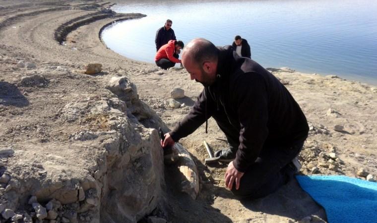 Kayseri'de 7,5 milyon yıllık yeni fosil bulundu