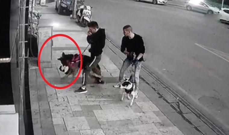 Alman kurdunun kaptığı kediyi ağzından 5 kişi zor kurtardı