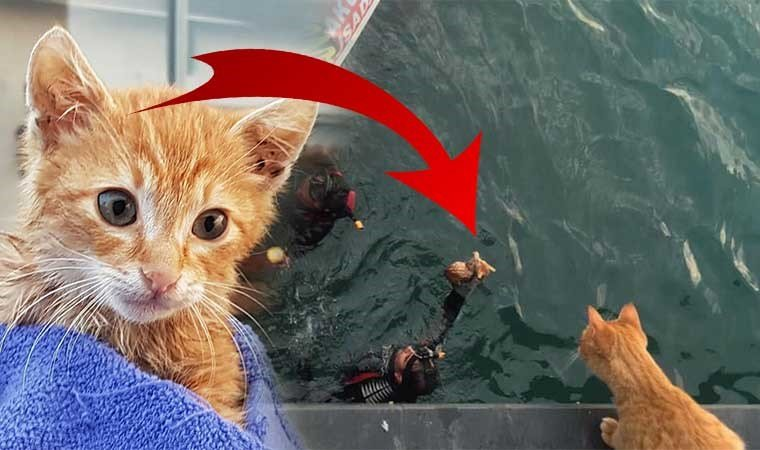 Anne kedi bir an olsun ayrılmadı...'Yavrum nerede?'