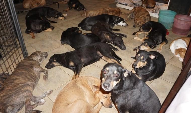 Kayseri'de, tehlikeli ırk sınıfına giren 9 köpeğe el konuldu