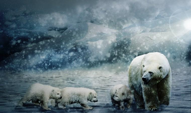 İklim değişikliği İtalya'da zorunlu ders olacak