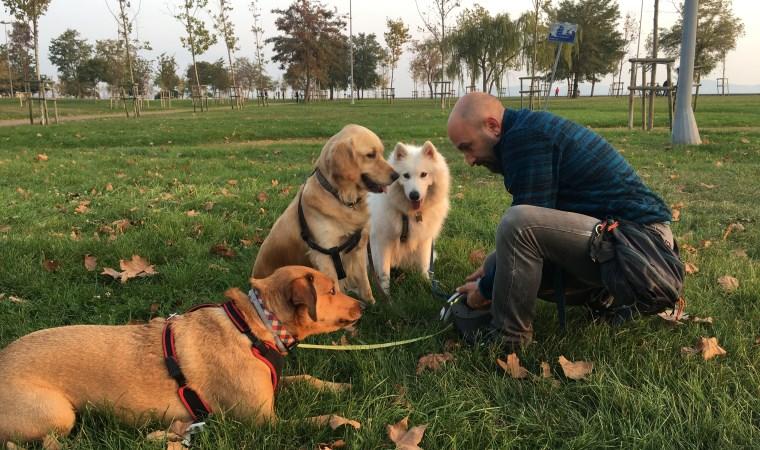 '4'ten fazla köpek aynı anda gezdirilmemeli'