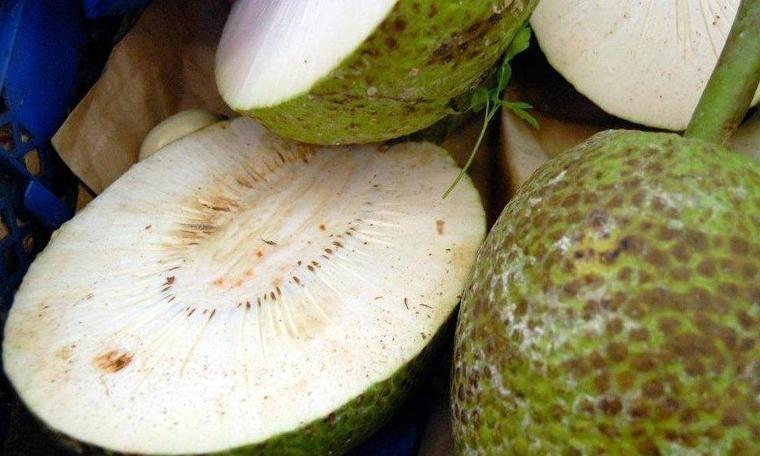 DERGİ - Ekmek ağacı meyvesi: Adalardaki 'süper besin'