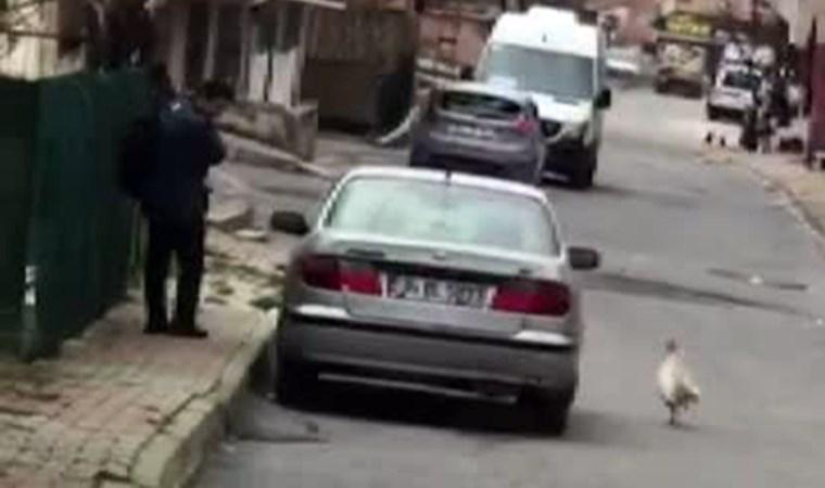 Horozun intikamı kamerada! Postacı neye uğradığına şaşırdı