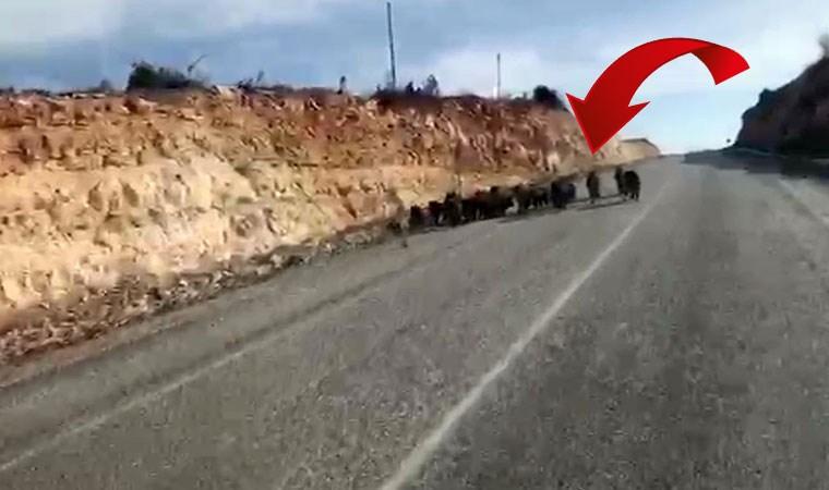 Sürücüler gördükleri karşısında şoke oldu!