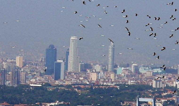 İstanbul'dan geçen göçmen kuşlar üzerinde virüs araştırması