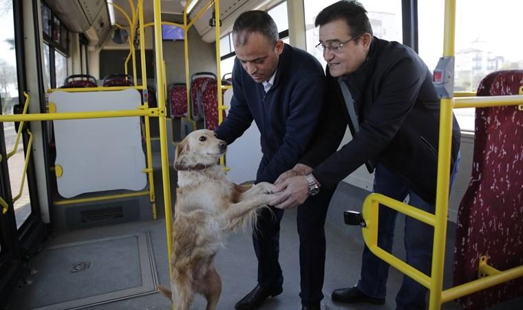 Soğukta titreyen köpek halk otobüsüne girip yurttaşlarla tokalaştı