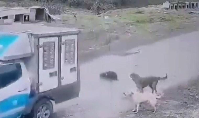 Köpeği ezen belediye çalışanı hakkında karar