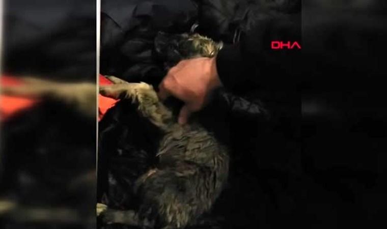 Soğuktan donan köpeği kalp masajı ile hayata döndürdü