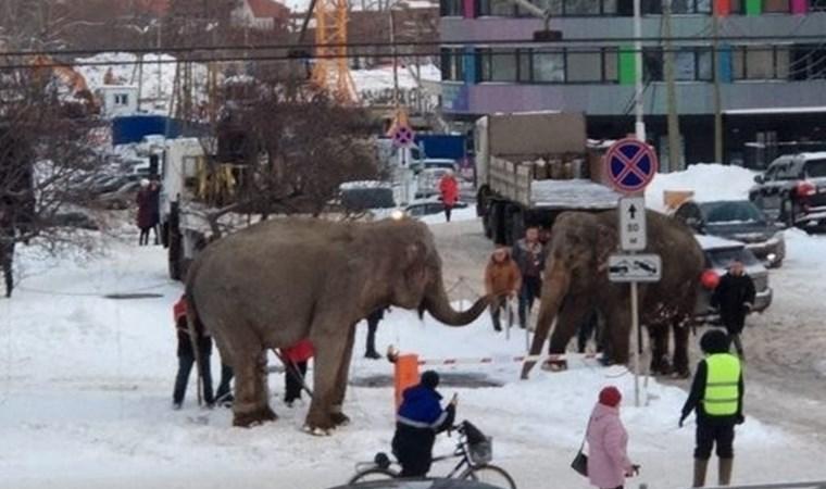 Sirkten kaçan filler ortalığı birbirine kattı