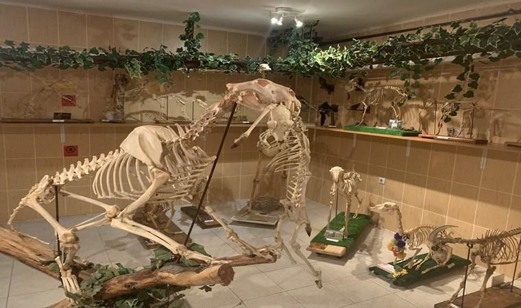 Türkiye'nin ilk anatomi müzesi: Ankara Üniversitesi Anatomi Müzesi