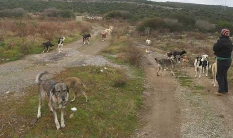 Urla'da 30 köpek boş arazide ölüme terk edildi