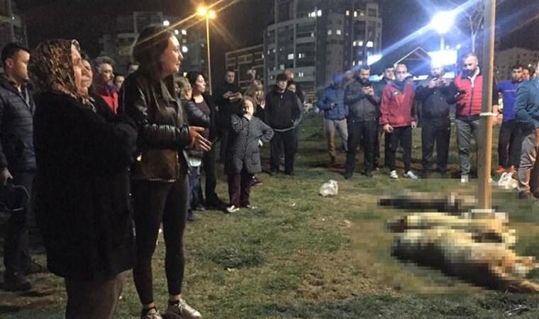 Ankara'daki köpek katliamına 10'ar yıl hapis