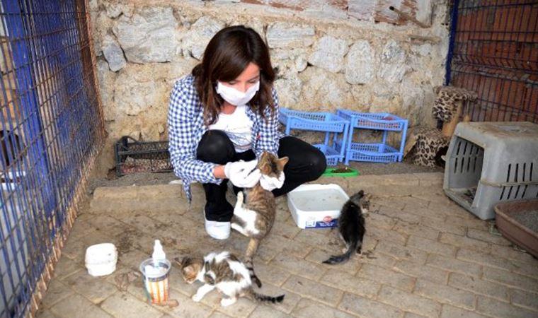 Kuşadası Hayvan Rehabilitasyon Merkezi'nde 18 ayda 3 bin 115 sokak hayvanı misafir edildi
