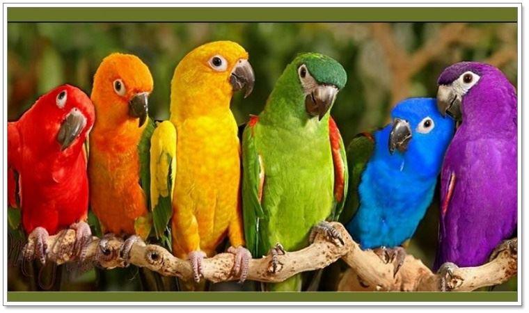 Kuşların felsefesi!