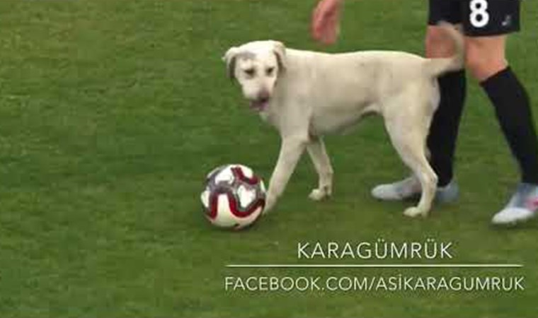 Köpek maça dahil oldu, görüntüleri milyonlar izledi!