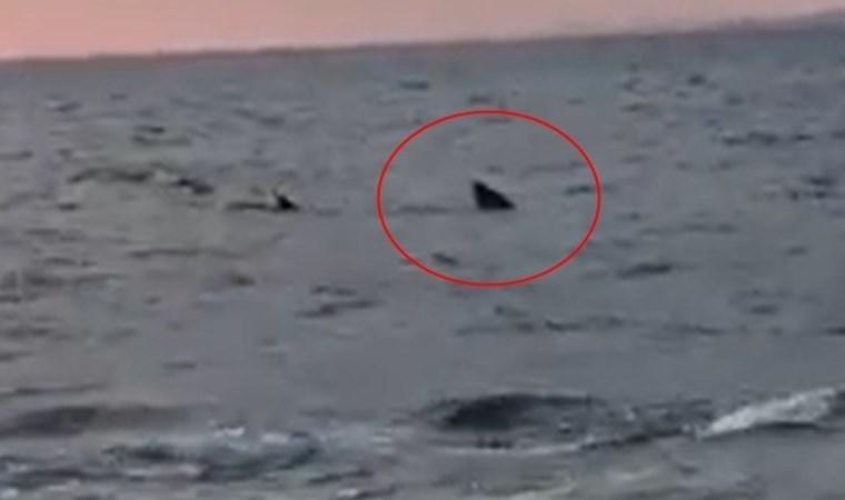 Ege Denizi'nde görüntülendi! Paniğe neden oldu