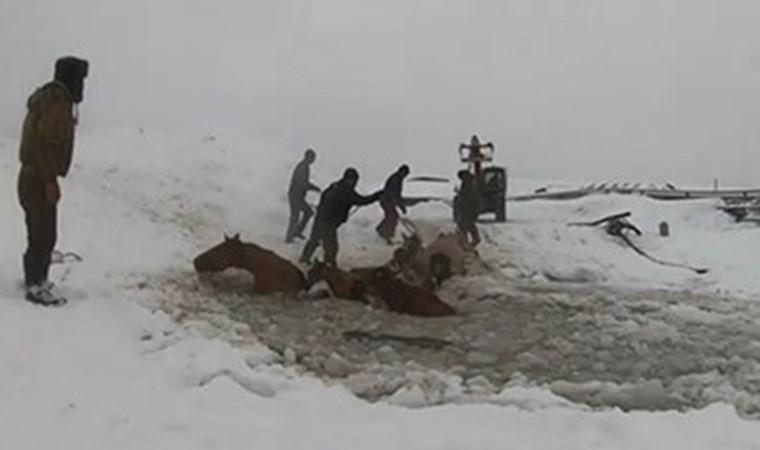 Buz kırılınca 7 at suya düştü