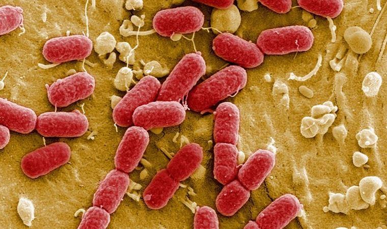 En tehlikeli bakterileri öldüren antibiyotik bulundu