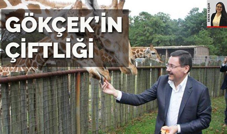 Ankara komedisi