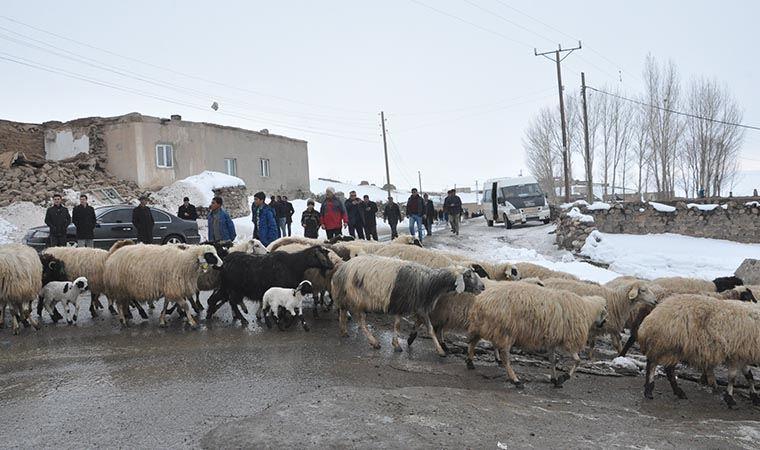 Depremde zarar gören hayvanlar için çalışma başlatıldı