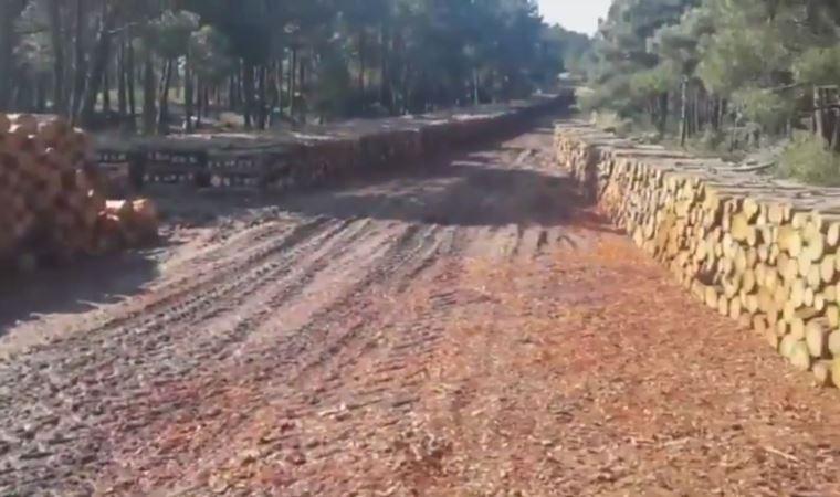 Kuzey Ormanları'nda binlerce ağaç kesildi