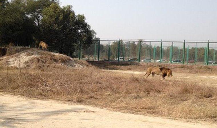 17 yaşındaki gencin kemikleri aslan kafesinde bulundu