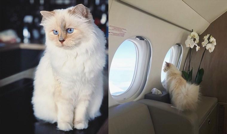 Karl Lagerfeld'in kedisi Choupette mirasın tadını Paris'te çıkarıyor
