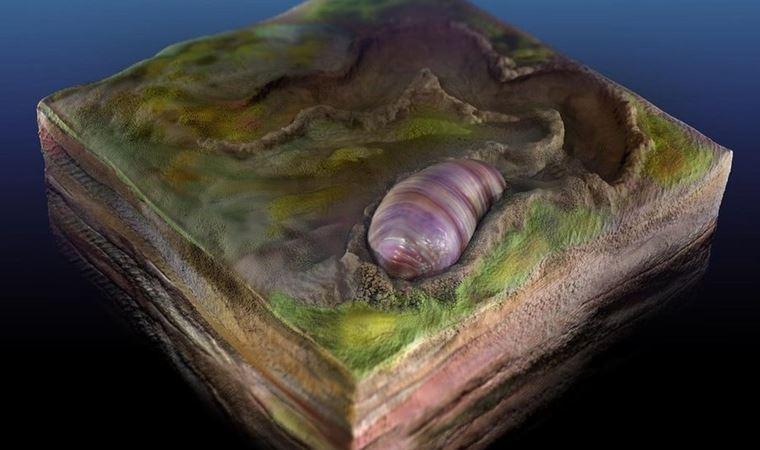 Evrimin başlangıcına ışık tutan solucan fosili bulundu