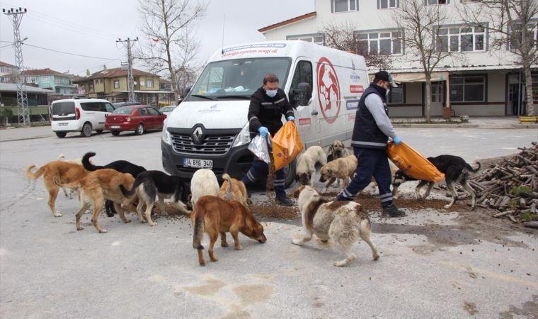 İBB, sahipsiz kalan hayvanlara mama dağıtıyor