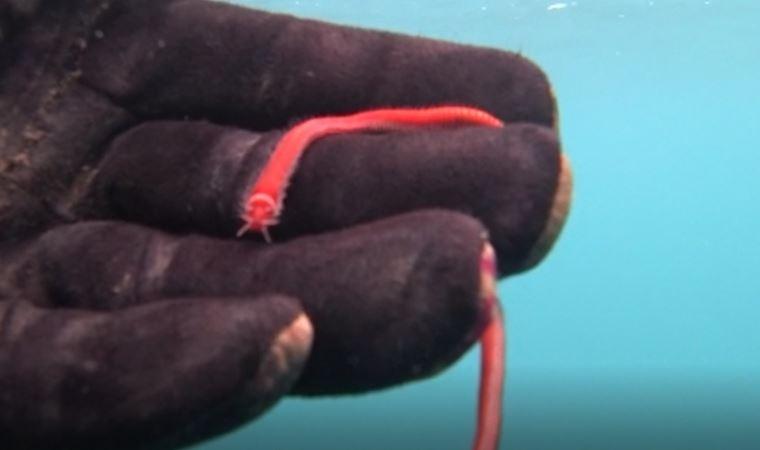 Rekortmen dalgıç görüntüledi: İlk defa karşılaştım