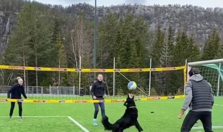 Voleybol oynayan köpek görenleri şaşırttı