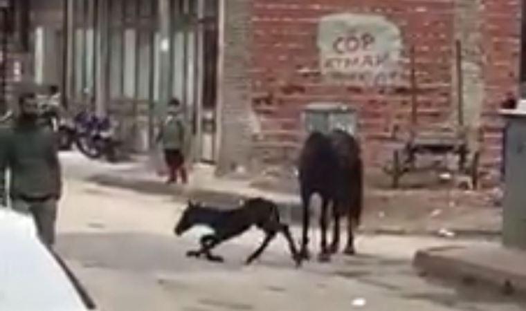 At, sokak ortasında doğum yaptı
