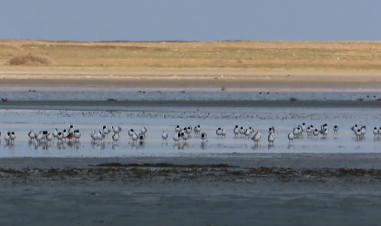 Ziyaretçi sayısı azalan göle, kuşlar akın etti