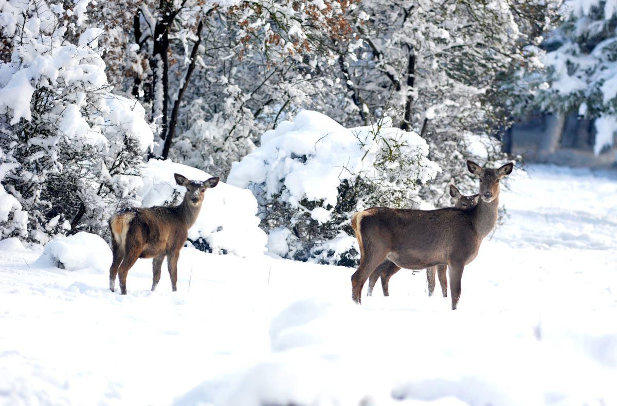 <p>Türkiye'de aşırı avlanma sonucu sayıları giderek azalan ve hayat alanlarını yitiren geyikler için 2004 yılında Uludağ Üniversitesi yerleşkesi içerisinde 72 hektarlık alana yetiştirme merkezi kuruldu.<br></p>