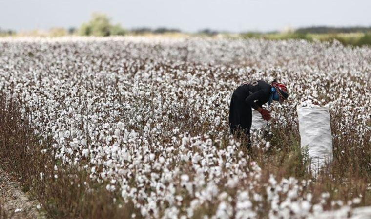 Barut: AKP sadece pamuk ithalatı için 24 milyar dolar ödedi