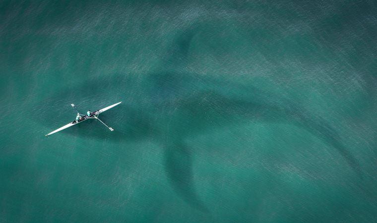 İnsan yüzlü yavru köpek balığı bulundu