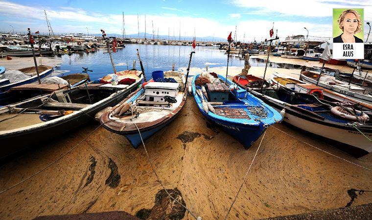 Marmara'da deniz salyası balıkçının kâbusu oldu