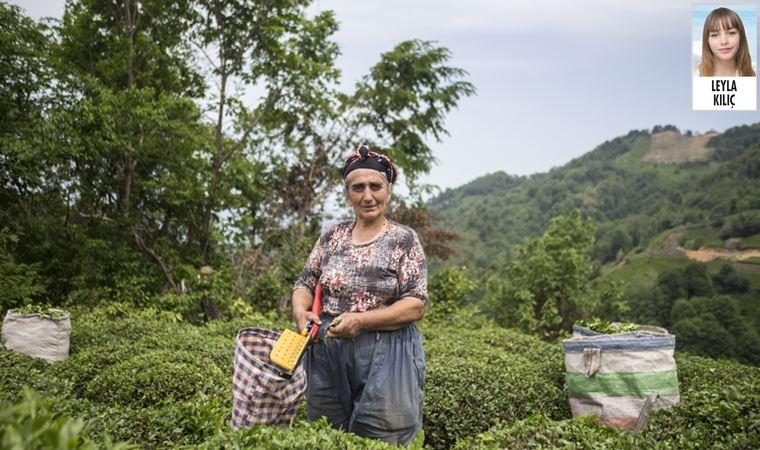 Rize'de üreticiler isyanda: Çayın tadı yok