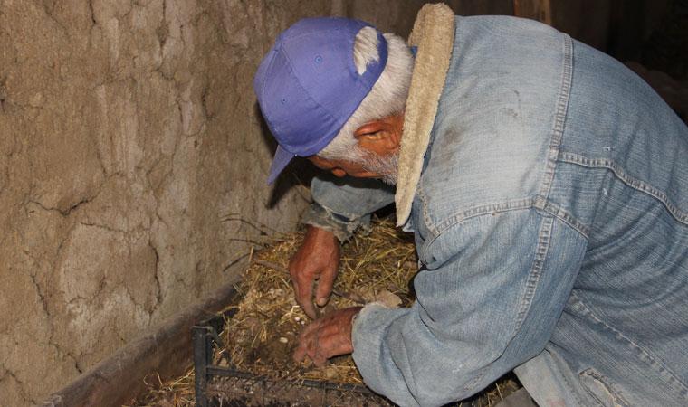 <p>Erzurum'da yaşayan Yusuf Taşçı isimli vatandaş 5 yıl önce aldığı bin solucanı 100 milyona ulaştırdı. Taşçı, şimdi yılda tonlarca solucan gübresi üretip yöre halkına ücretsiz dağıtıyor.</p>