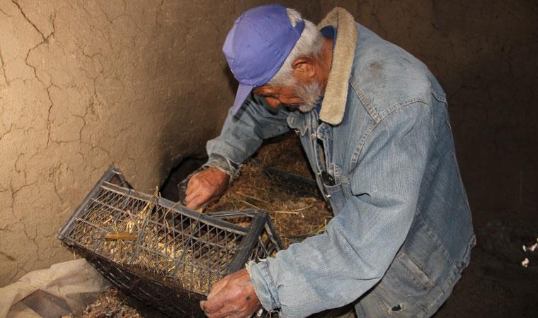 <p>Erzurum'un Uzundere ilçesinde yaşayan 56 yaşındaki Yusuf Taşçı solucan gübresi üretmek için 5 yıl önce Tekirdağ'da bir çiftlikte 1 hafta çalıştıktan sonra oradan aldığı bin solucanla gübre üretimine başladı. Mahallesinde bulunan 240 metrekarelik eski bir binayı gübre üretmek için kullanan Taşçı yılda tonlarca katı ve sıvı solucan gübresi üretiyor.</p>