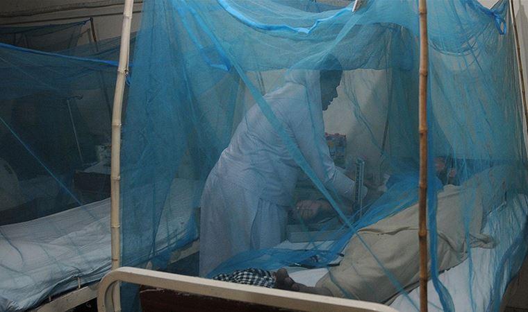 Bilim insanları, 'bakterili sivrisinek' kullanarak dang humması vakalarını yüzde 77 azaltmayı başardı
