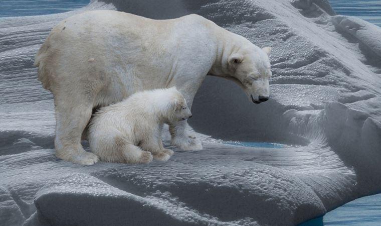 Uluslararası uzmanlardan iklim değişikliği ve biyoçeşitlilik kaybının önlenmesi için aksiyon çağrısı