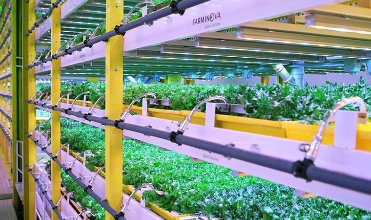 Gıda krizi üzerine bitki fabrikaları çözümü