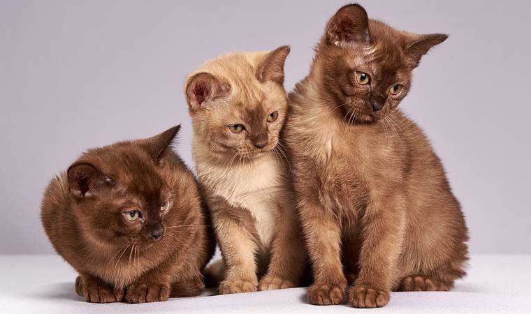 Kediler ve sahipleri arasındaki 5 tür ilişki